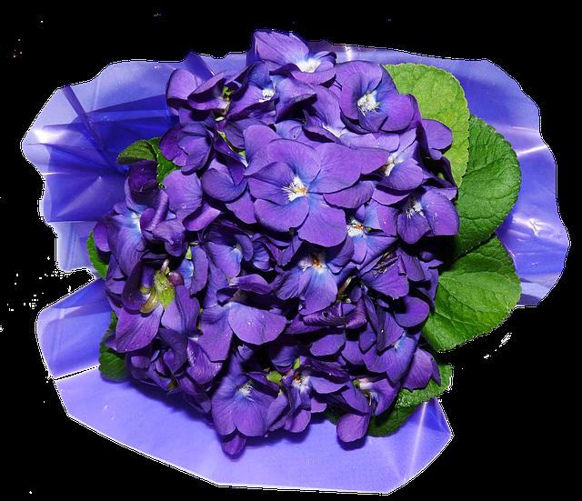 Veilchen Blüten